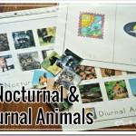 Nocturnal Animals Sort