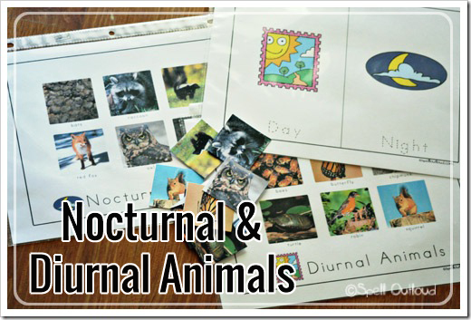Nocturnal Animal Sort