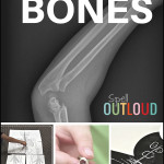 The Human Body: Learning About Bones