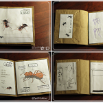 ant nature journal