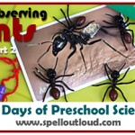Ant Activities and Ant Journal