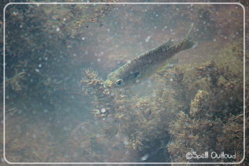 I spy a fish