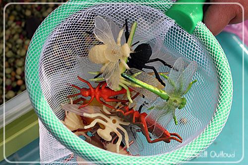 Insect sensory box