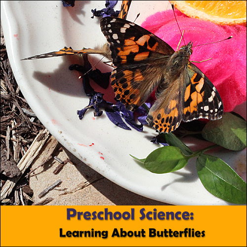 preschool science butterflies
