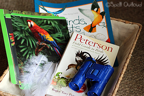 bird science basket from Spell Outloud