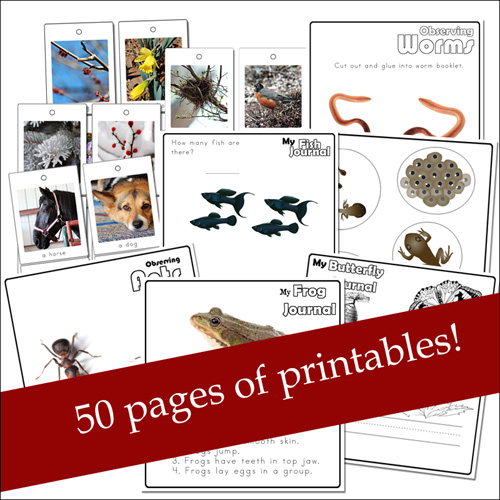 Nature Printables for Preschoolers