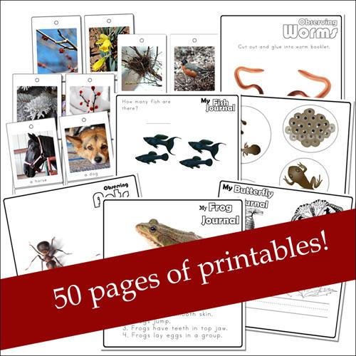 Nature Printables for Preschoolers