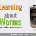 learning about worms: creating a wormery