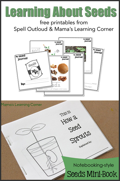 Free Studying Seeds Unit with Printable Mini-Book, Seed ...