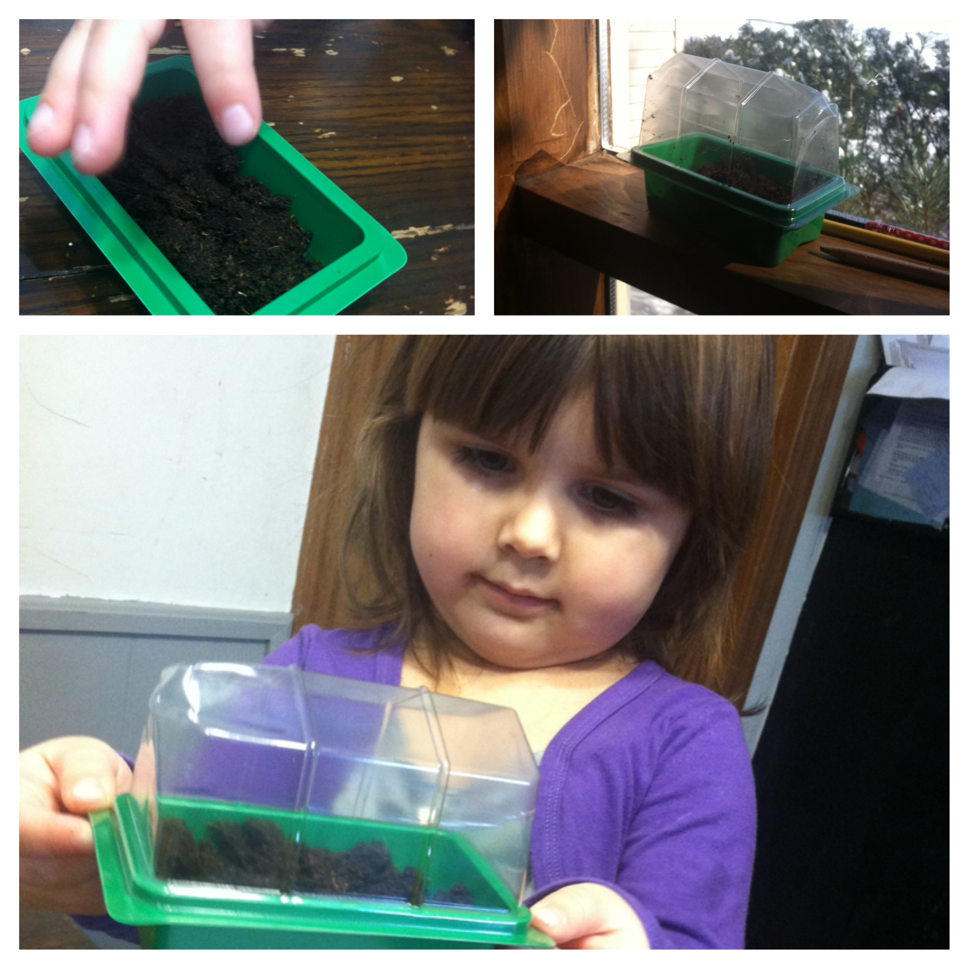 Learning About Seeds