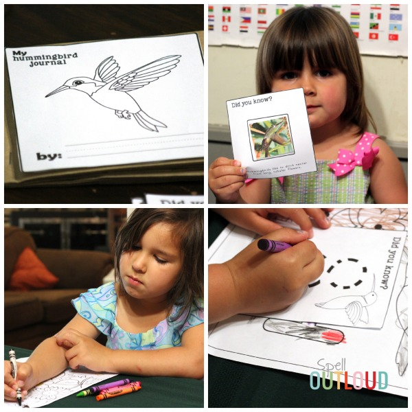 Learning About Hummingbirds