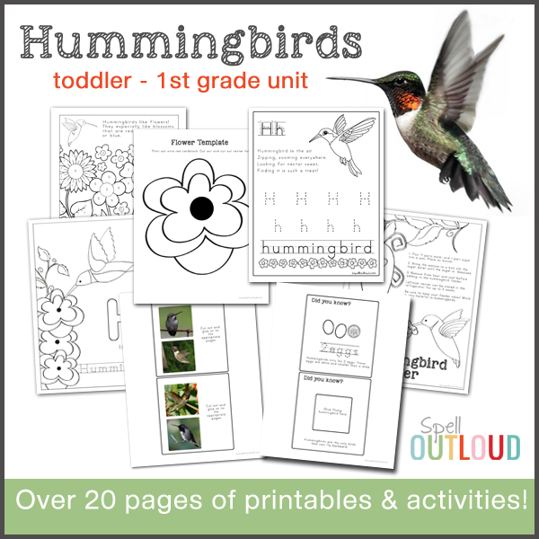 hummingbird nature study