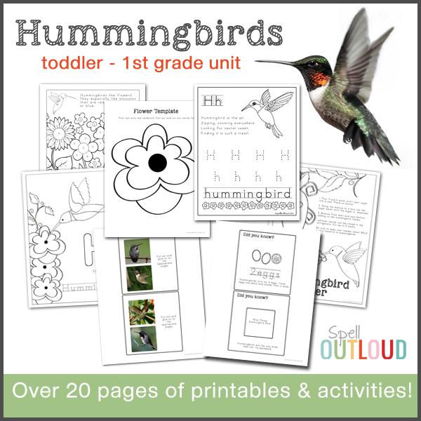 hummingbird nature study