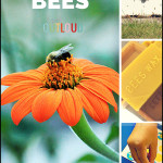 Preschool Science: Learning About Bees