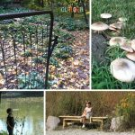 Fall Nature Study Ideas for Toddlers and Preschoolers